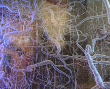 細胞的訊號傳遞與癌症
